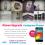 #SmartUpgrade Instagram Promo Win O+ 8.9 Smartphone